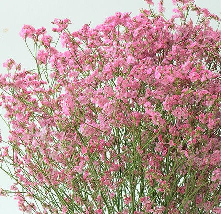 Dried Flower Arrangements, Caspia, Limonium