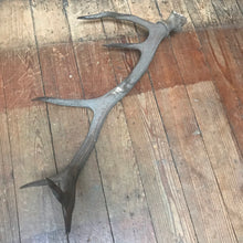 SOLD - Six Point Antler