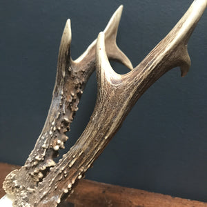 SOLD - Vintage Traditional Style Roe Deer Antlers