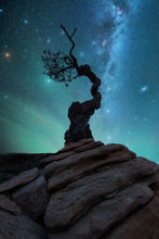 Zion tree Composite 2 Tutorial