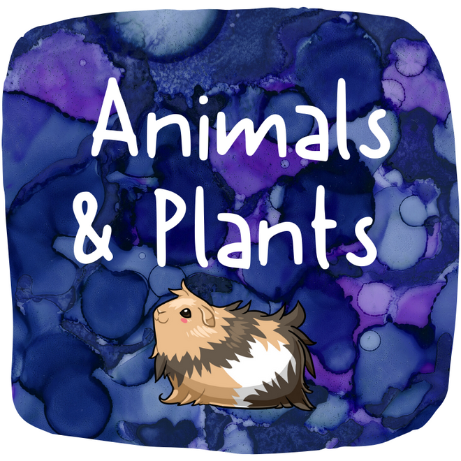 Animals and Plants!