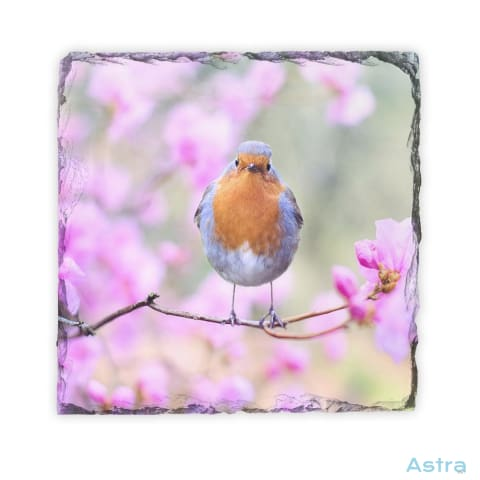 Bird Square Photo Slate Home Decor 10-20 Animal-Lovers Animals Homedecor Household-1 $16.95 Astraest.com: Astraest