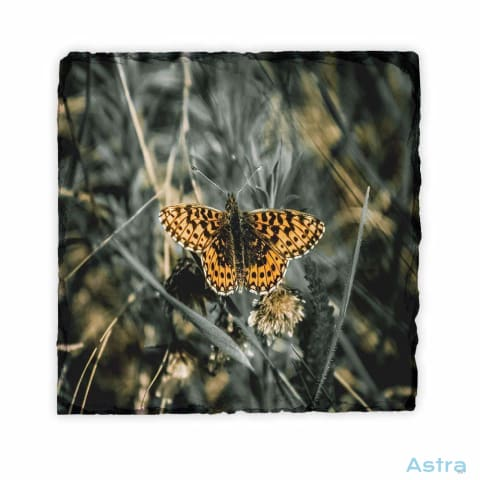 Butterfly Square Photo Slate Home Decor 10-20 Homedecor Household-1 Photo-Slate Photo-Slates $16.95 Astraest.com: Astraest