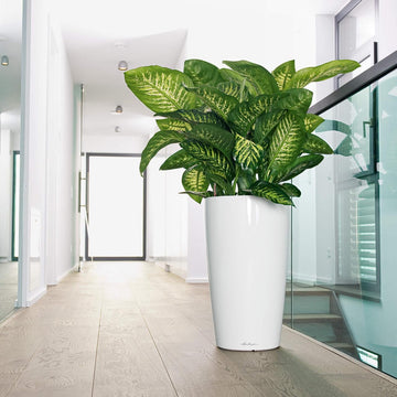 Rondo Self Watering White Planter, made in Germany | Spencer Interiors