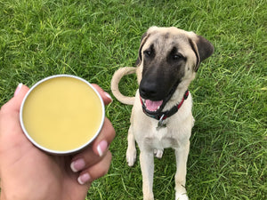 Botanical Dog Balm