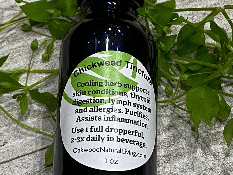 Tincture - Chickweed