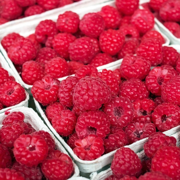 Simply Fruit Fragrances