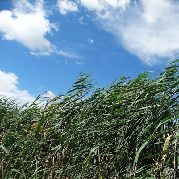 Earthy & Outdoor Fragrances