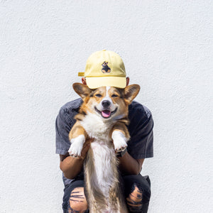 Yellow Thicc Corgi Butt Hat *LIMITED EDITION*