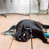 Kitty RC Cat Leash - Fish - Treat Your Dog Good