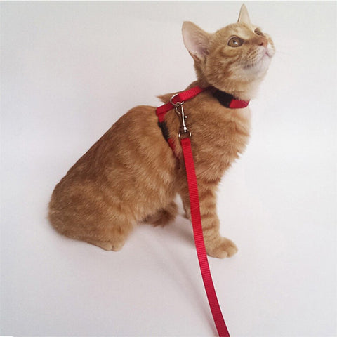 Cat Harness And Leash Nylon Animals - Treat Your Dog Good