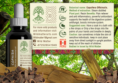 Copaiba Oil - Natural Resin Remedy of the Amazon - Wild Matter Arts