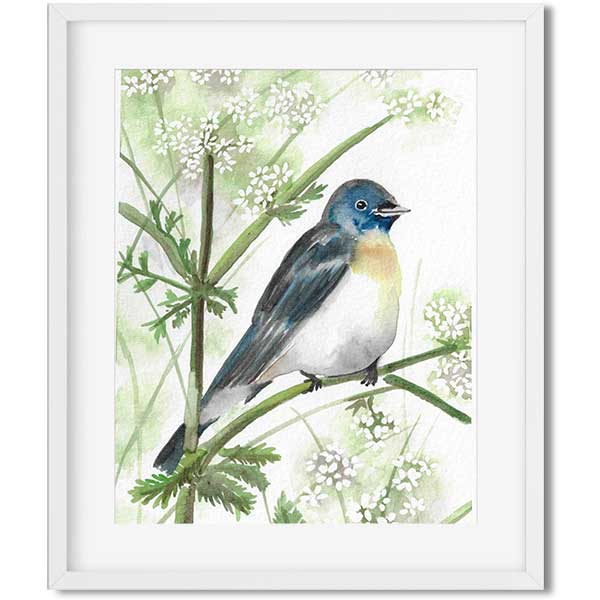 original art - watercolor bird sitting on a branch with white flowers - flavia bernardes art