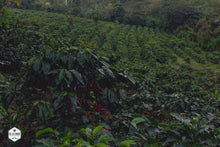 Honduras - Finca Deborah - Yield Coffee Roasters