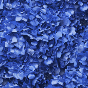 Blue Hydrangea Cushion by Flying Dutchman Walls