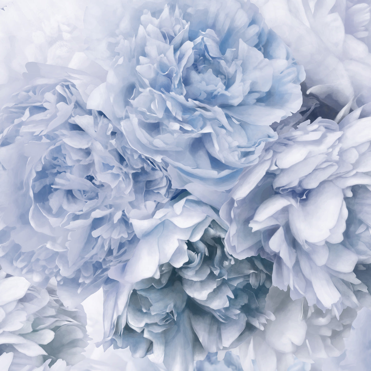 Blue Peony Cushion by Flying Dutchman Walls