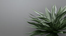 Green on Grey Agave Mural Wallpaper