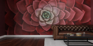 Deep Red Echeveria Mural Wallpaper