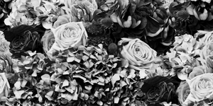Black and White Hydrangea, Protea and Rose Bouquet Wallpaper