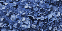 Dusty Blue Hydrangea Wallpaper