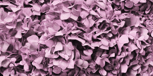 Dusty Pink Hydrangea Wallpaper