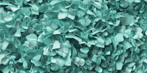 Mint Green Hydrangea Wallpaper