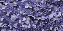 Purple Hydrangea Wallpaper