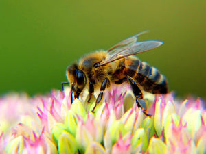 5 Facts About Bee Farming