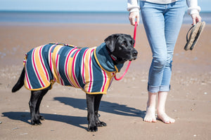 Dog Friendly Beach Wear
