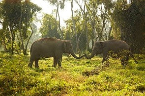 The Elephant in the Zoom: How to Make a Trunk Video Call and Support Elephant Welfare 