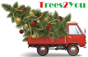 Christmas Trees Delivered Sydney
