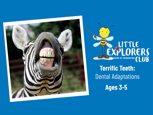Little Explorers Club + Terrific Teeth: Dental Adaptations