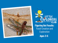 Little Explorers Club + Figuring Out Fossils: Fossil Creation and Exploration