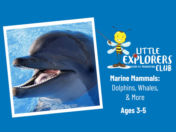 Little Explorers Club + Marine Mammals: Dolphins, Whales, and More