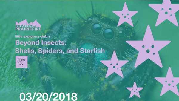 Little Explorers Club + Beyond Insects: Shells, Spiders, and Starfish