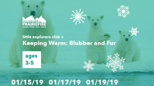 Little Explorers Club + Keeping Warm: Blubber and Fur