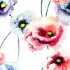 Poppies on White - Watercolor Logo