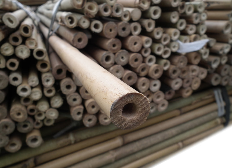 10PK 8FT Bamboo Canes