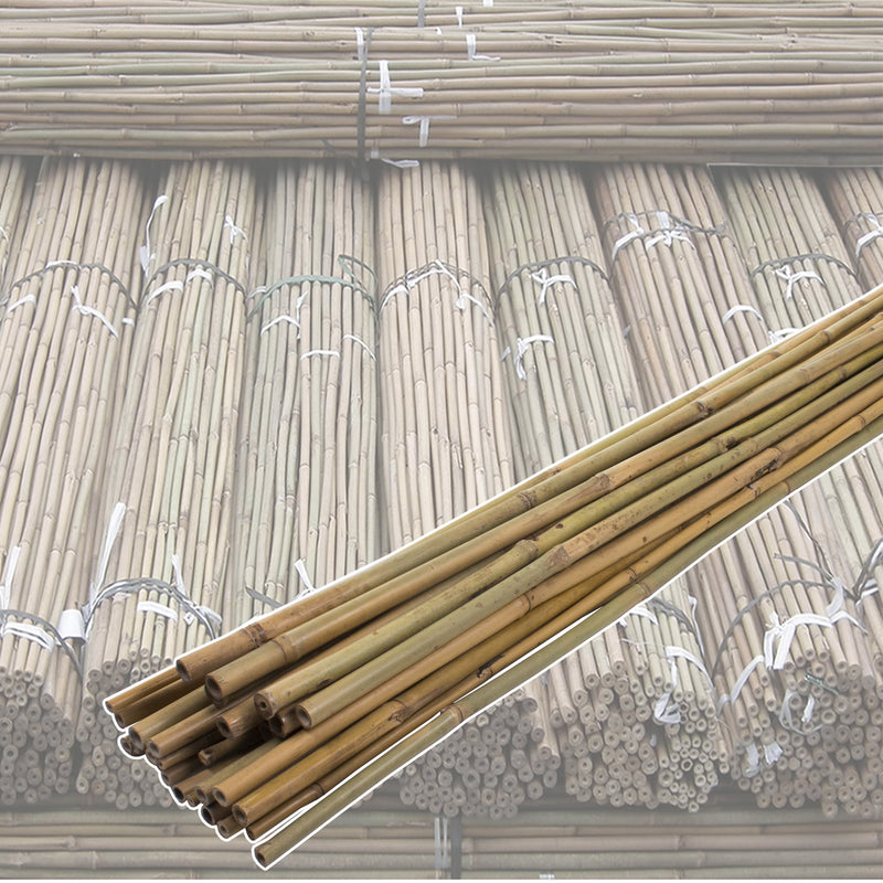 10PK 6FT Bamboo Canes