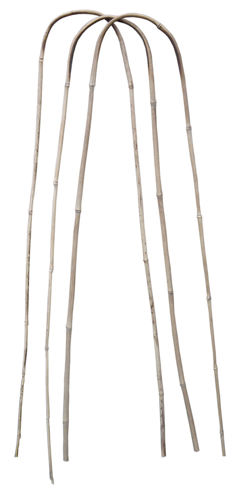 Pack of 3 U-Shape Bamboo Canes
