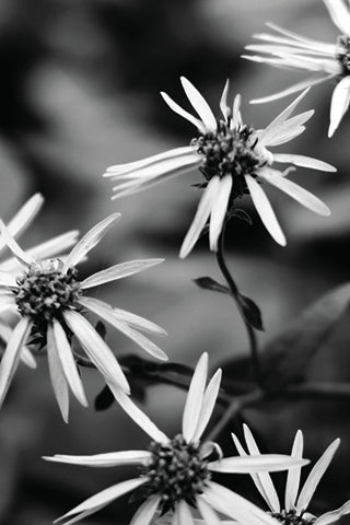 Black & White Canvas - Nature Scapes Set #6