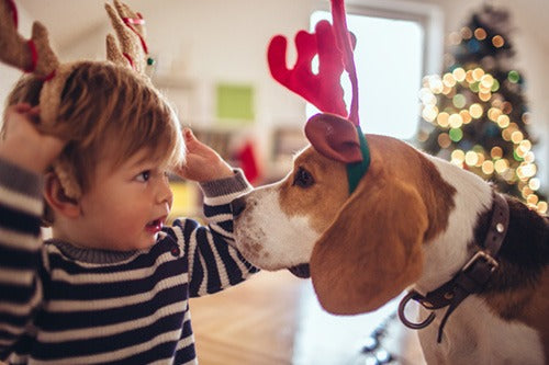 toddler facing dog both wearing toy hat reindeer antlers