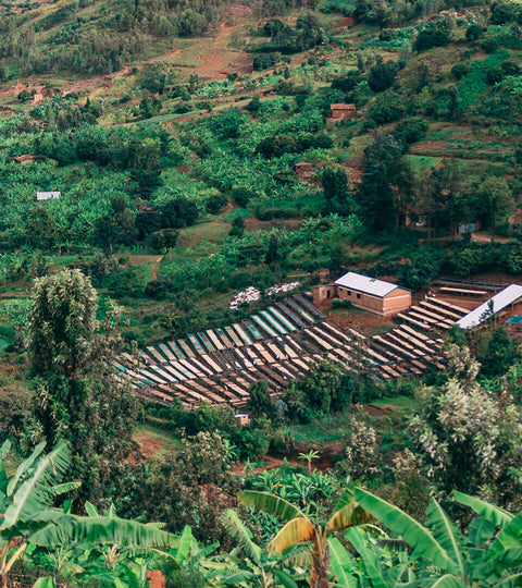 A short history of coffee in Rwanda