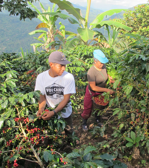 Who grows our coffee? The ACPC Pinchanaki Cooperative, Peru
