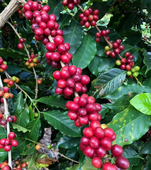 Drink Nemba, September's Roasters Choice Subscription Coffee