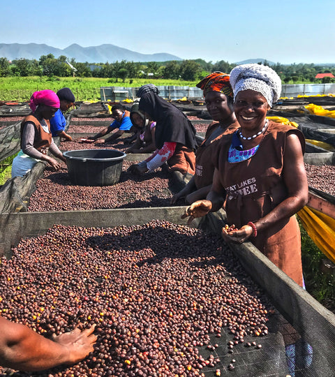 Who grows our coffee: Great Lakes Coffee Company, Uganda
