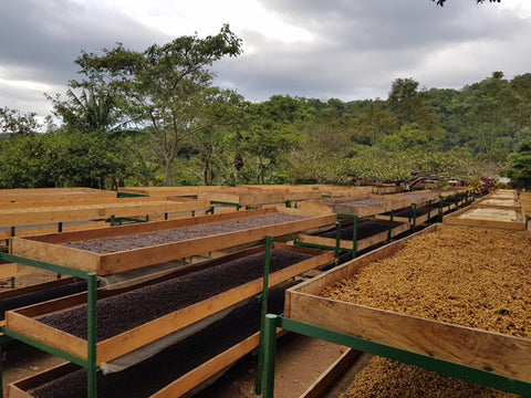 Volcano Coffee Works visits Red Associations, Colombia