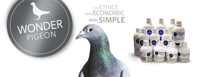 Wonder Pigeon – Enhanced Breeding and Race Performance
