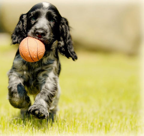 Natural Joint Pain and Arthritis Relief for Dogs: Chondroitin & Glucosamine