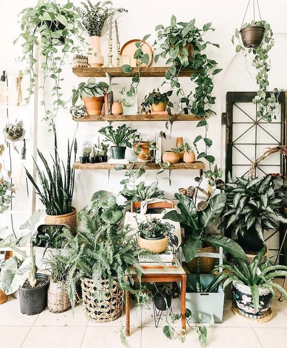 House Plants for Productivity and Peace